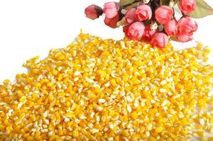 有机玉米碴